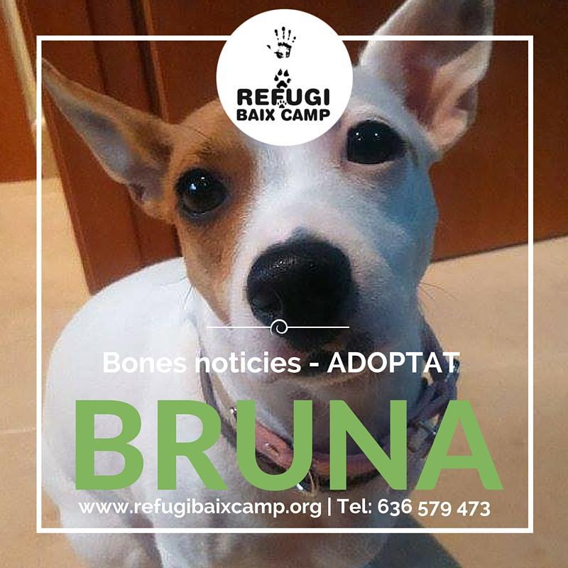 Adoptat Bruna1