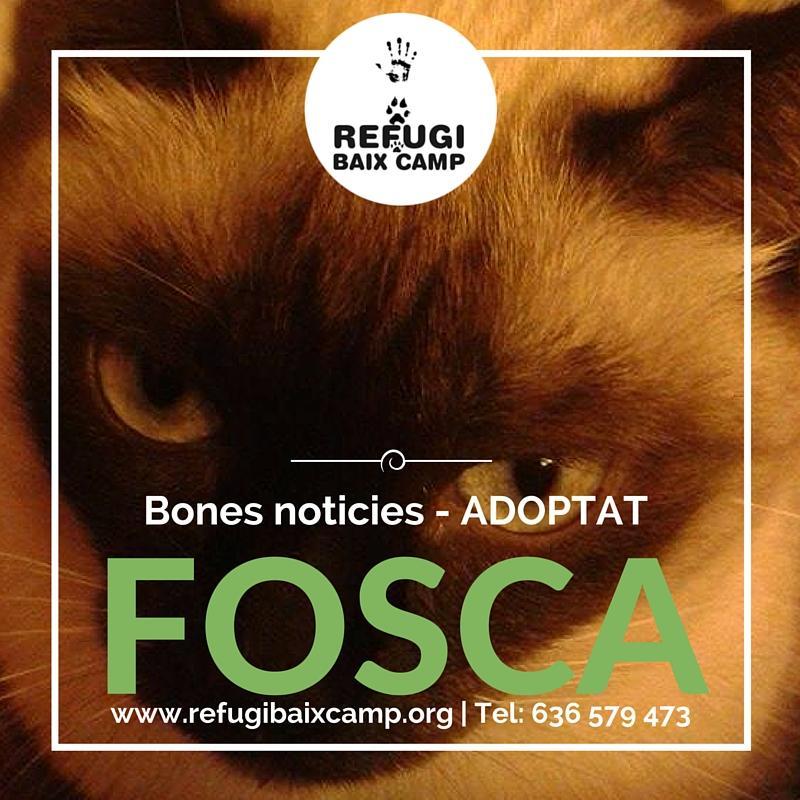 Adoptat Fosca1