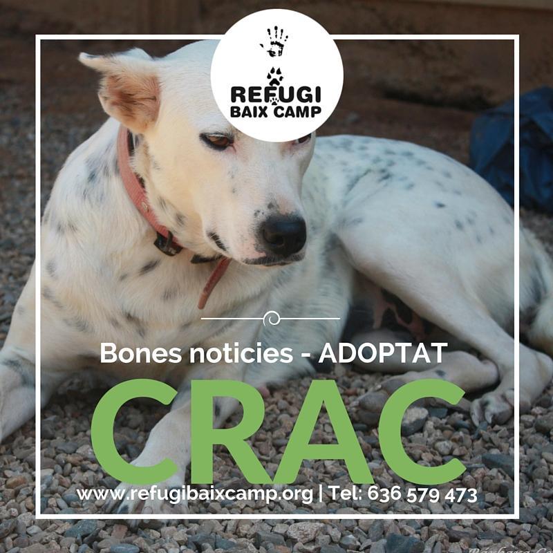 Adoptat Crac1