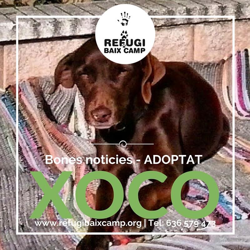 Adoptat Xoco1
