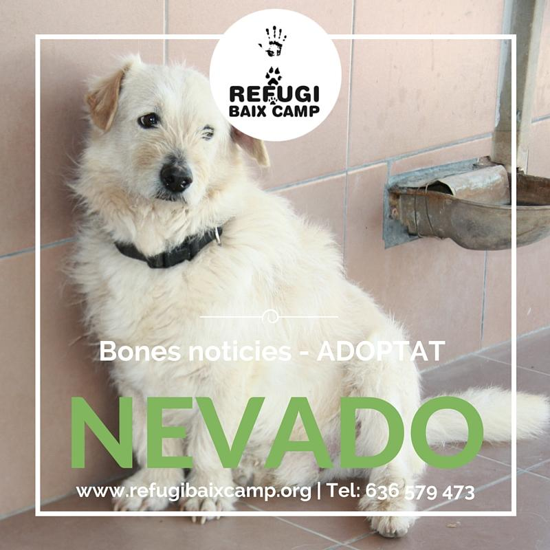 Adoptat Nevado1