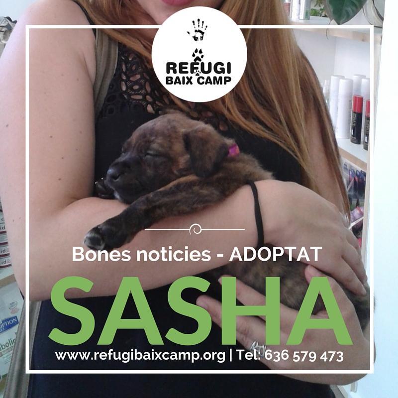 Sasha Adoptat