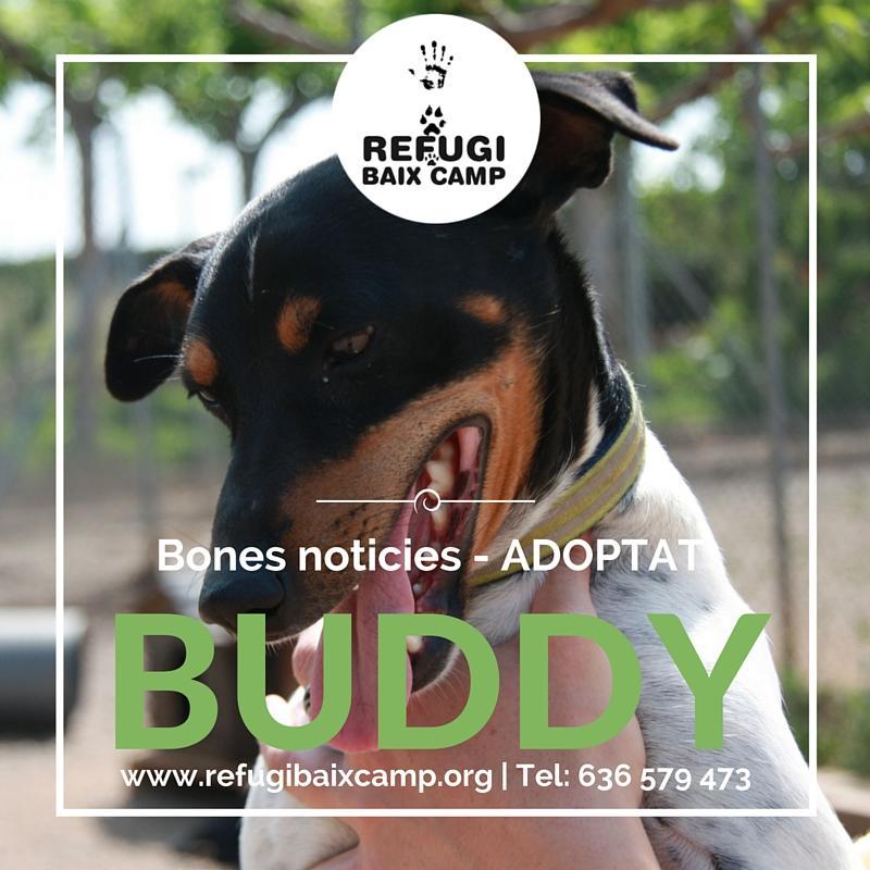 Adoptat Buddy