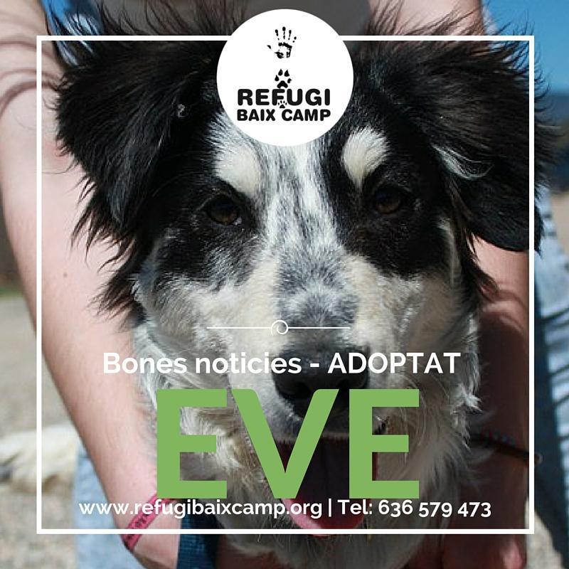 Eve Adoptado