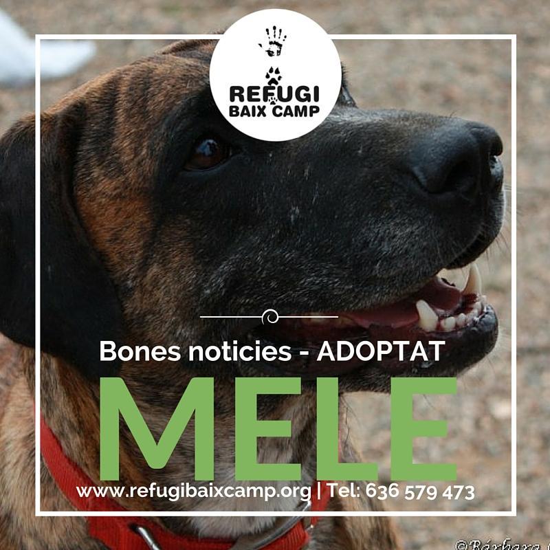 Adoptat Mele