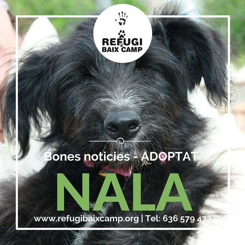 Adoptat Nala