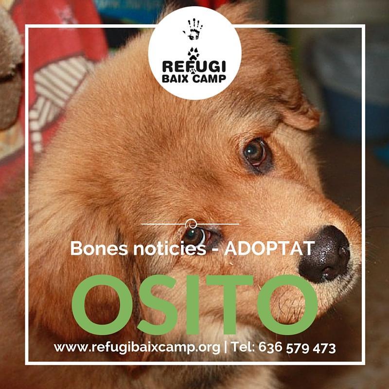 Adoptat Osito