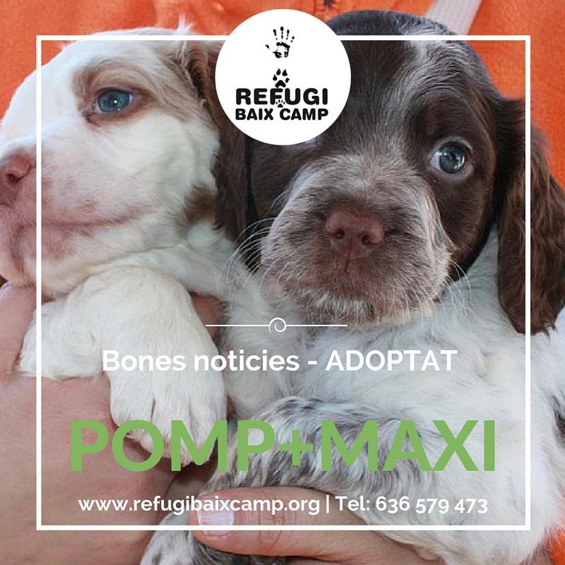 Pomp Y Maxi Adoptado