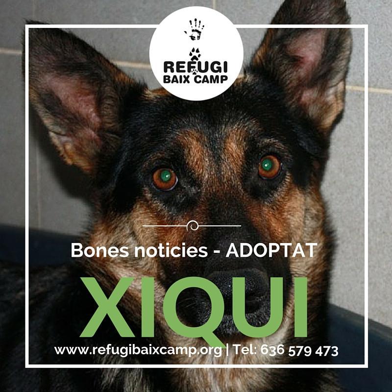 Xiqui Adoptat