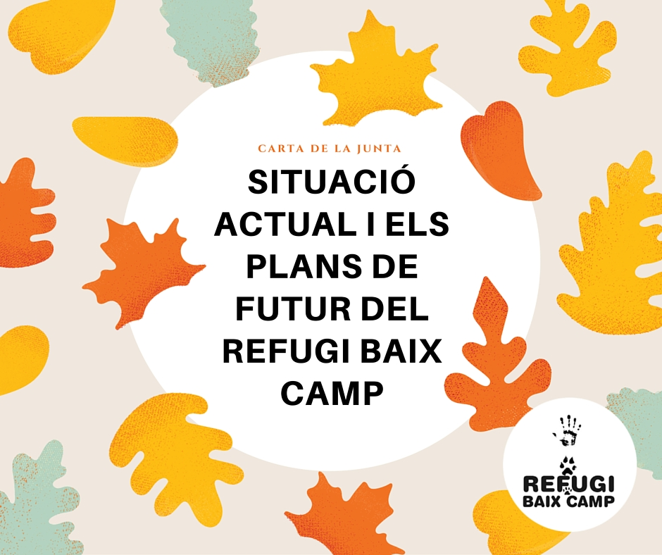 Situació Actual I Els Plans De Futur Del Refugi Baix Camp
