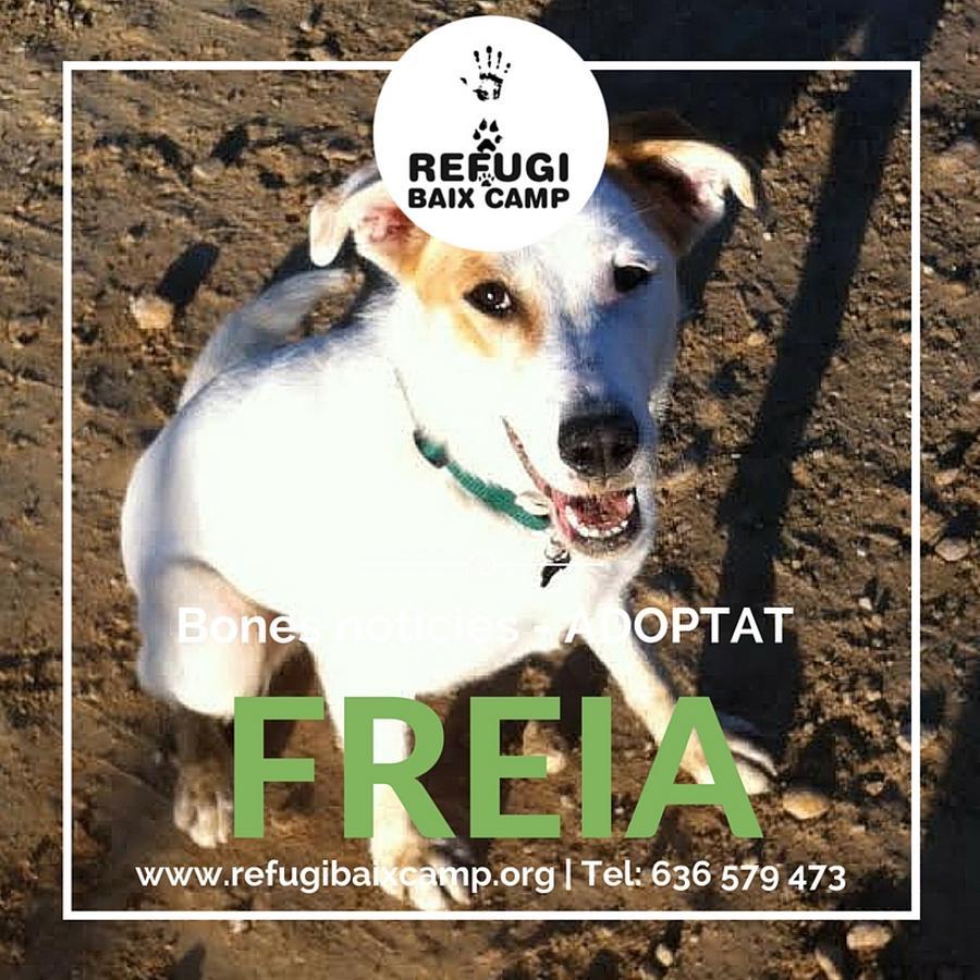 Adoptat Freia