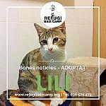 Lili Adoptat