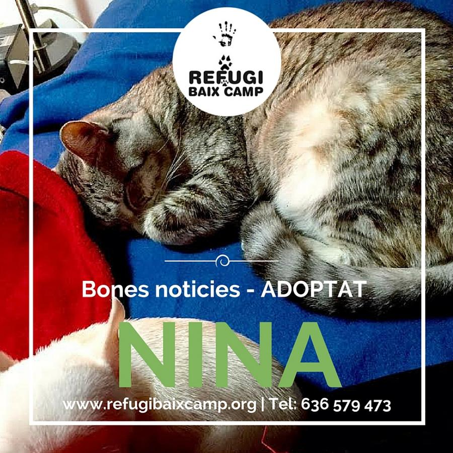 Adoptat Nina