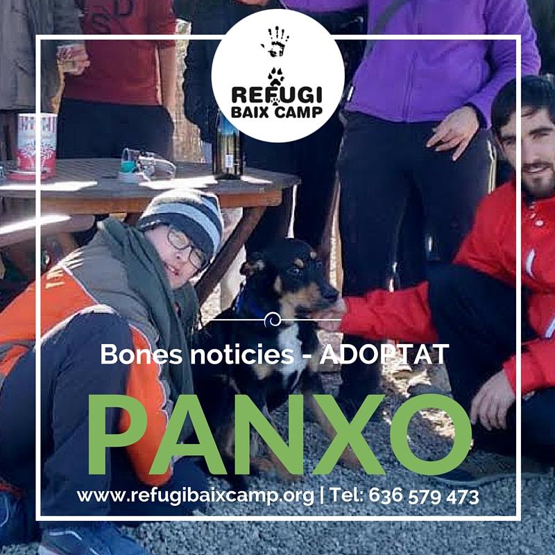 Adoptat Panxo