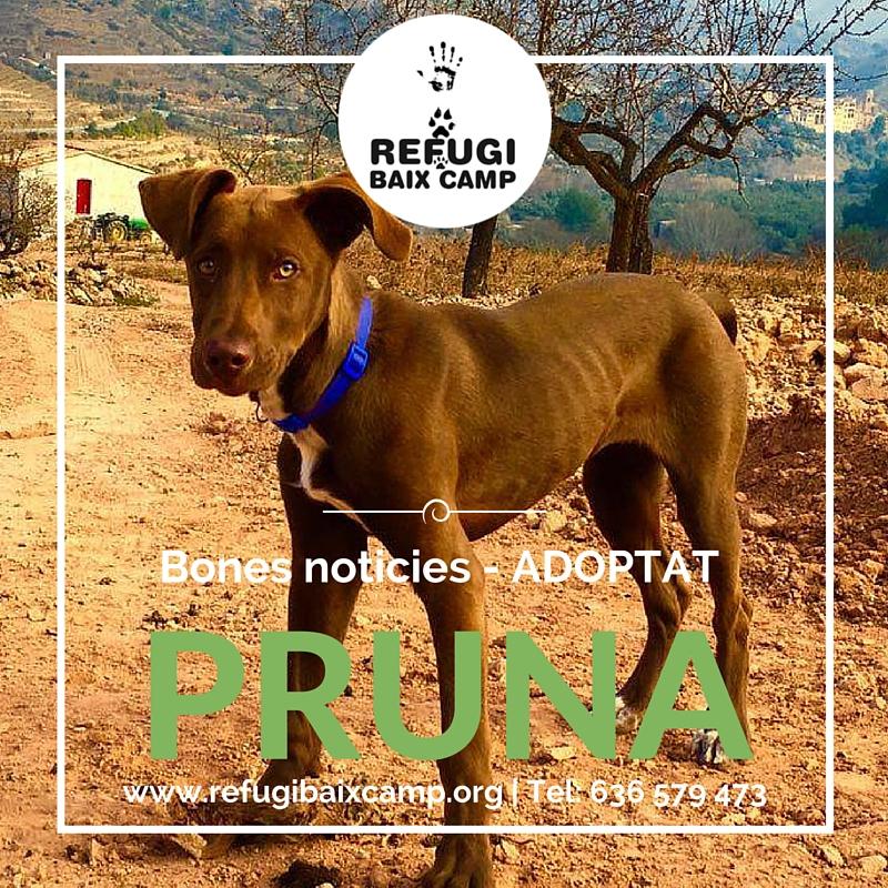 Adoptat Pruna