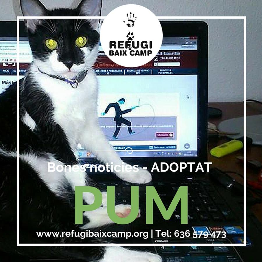 Adoptat Pum