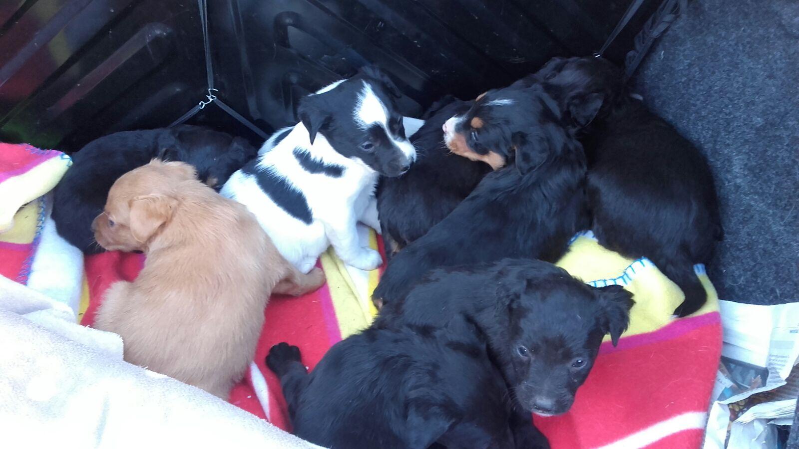 Rescate De Perra Y Cachorros En Les Borges Del Camp
