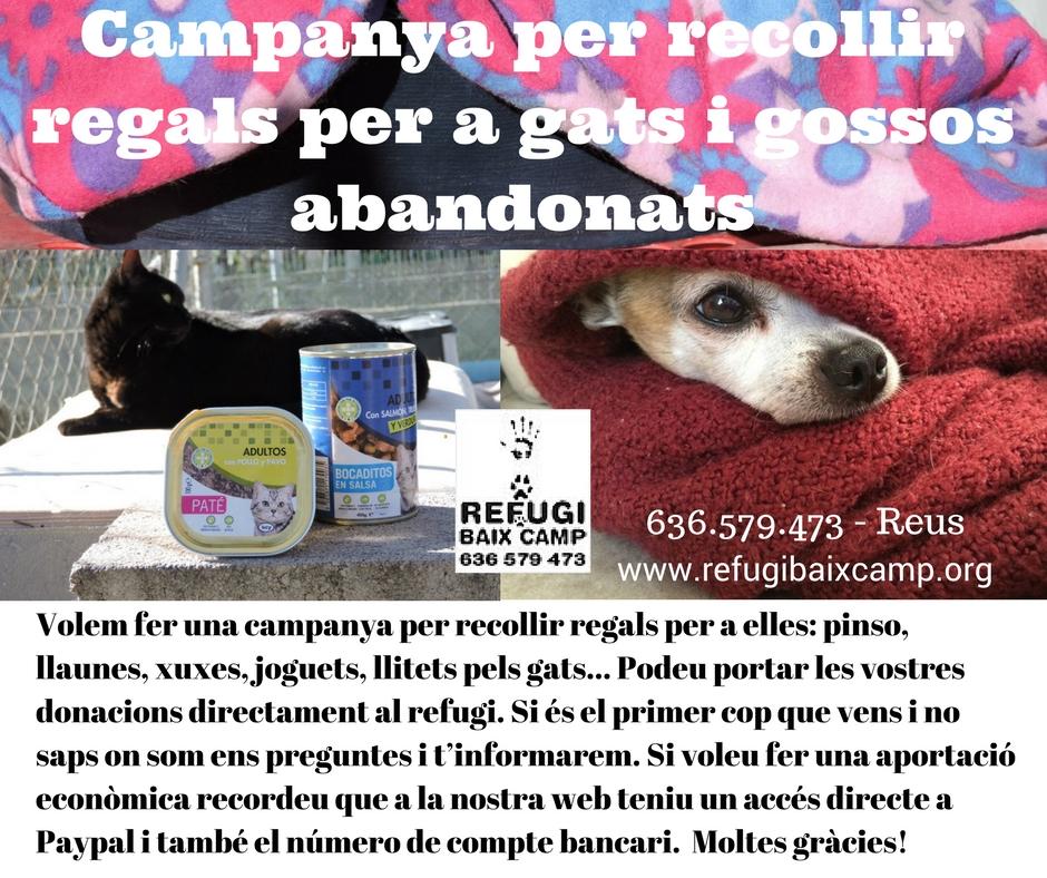 Campanya Per Recollir Regals Per A Gats I Gossos Abandonats