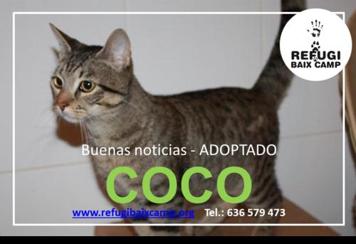 COCO ADOPTADO