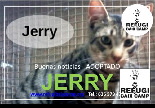 JERRY ADOPTADO