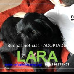 LARA ADOPTADA