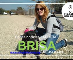 BRISA ADOPTADA