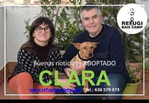 CLARA ADOPTADA