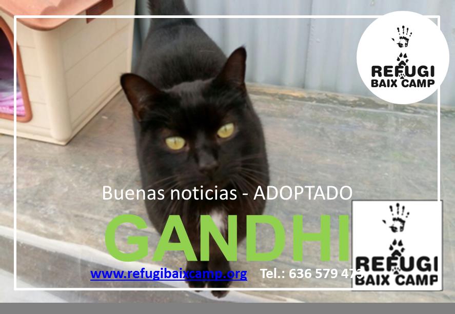 GANDHI ADOPTADO