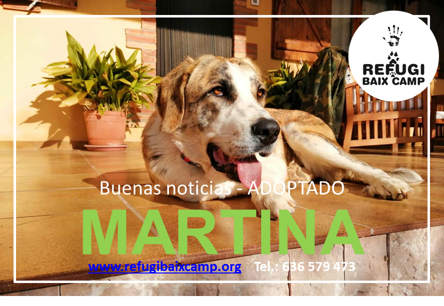 MARTINA ADOPTADA
