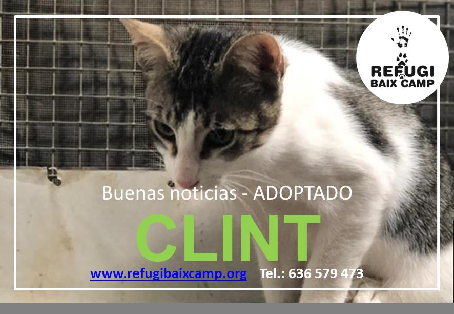 CLINT ADOPTADO