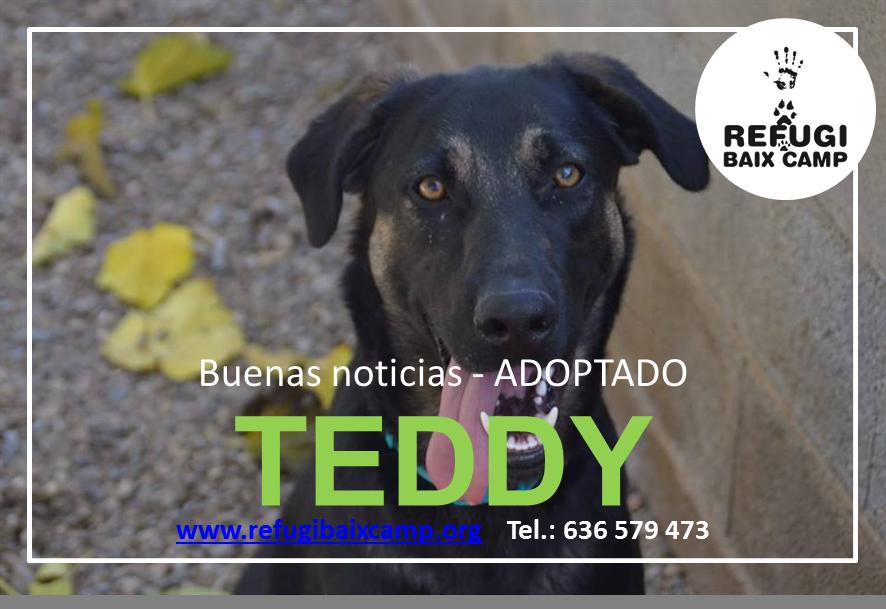 TEDDY ADOPTADO