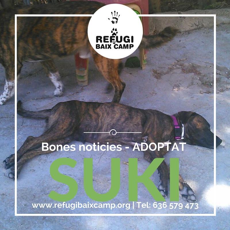 Suki Adoptado