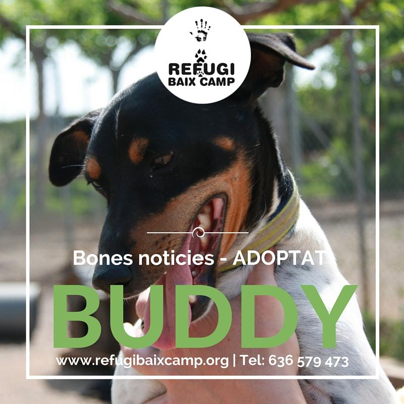 Buddy Adoptado
