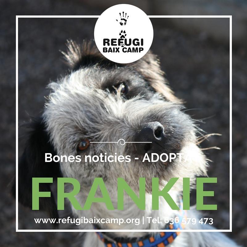 Frankie Adoptado