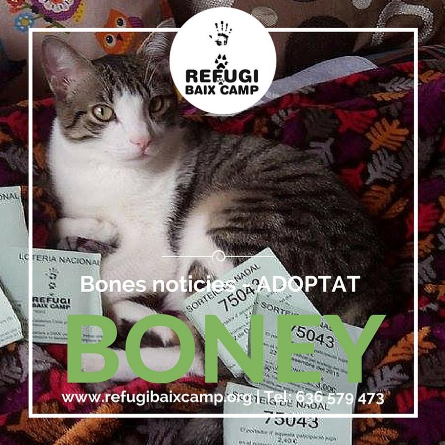 Boney Adoptado