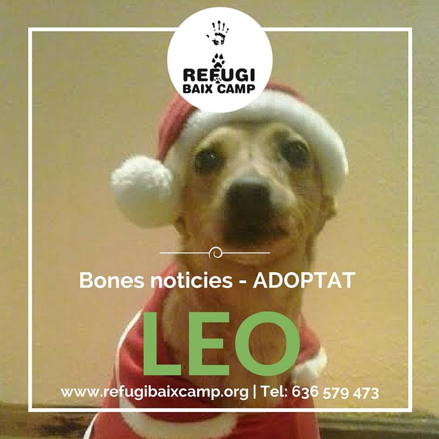Leo Adoptat