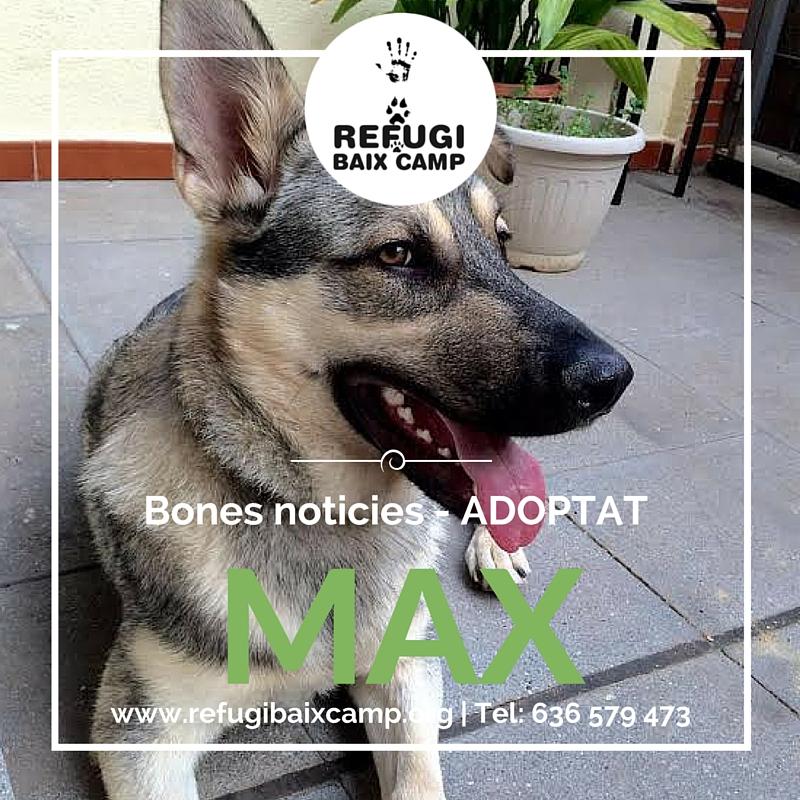 Max Adoptado