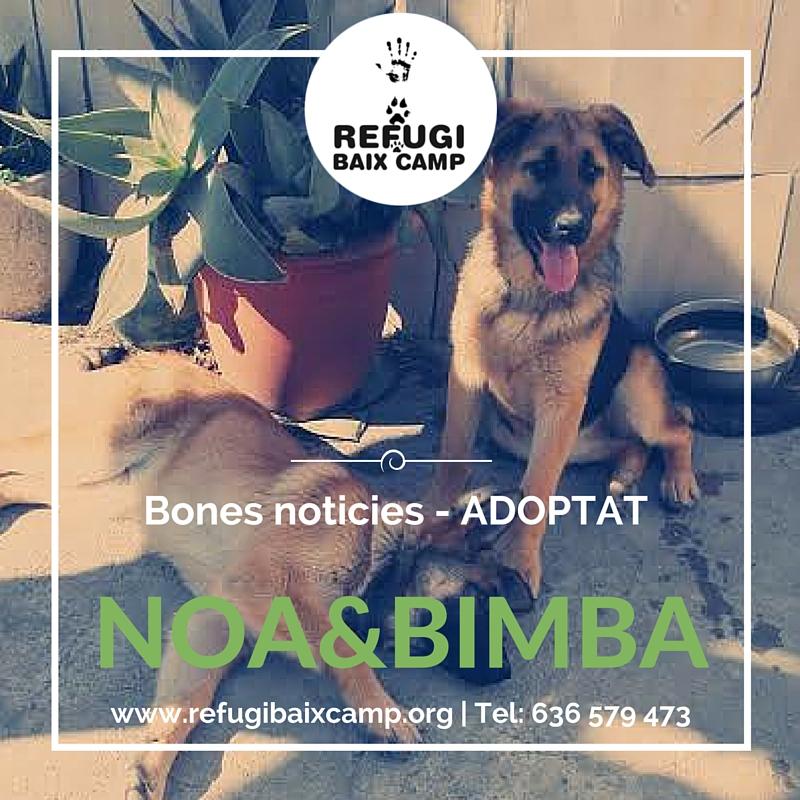Noa & Bimba Adoptados