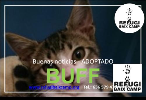 BUFF ADOPTADO