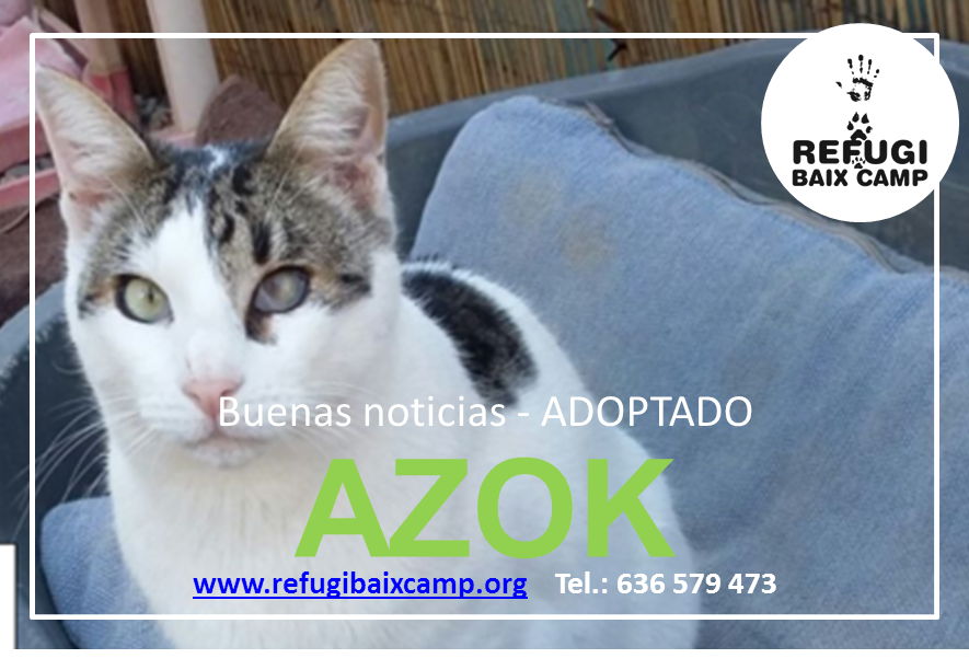 AZOK ADOPTADO