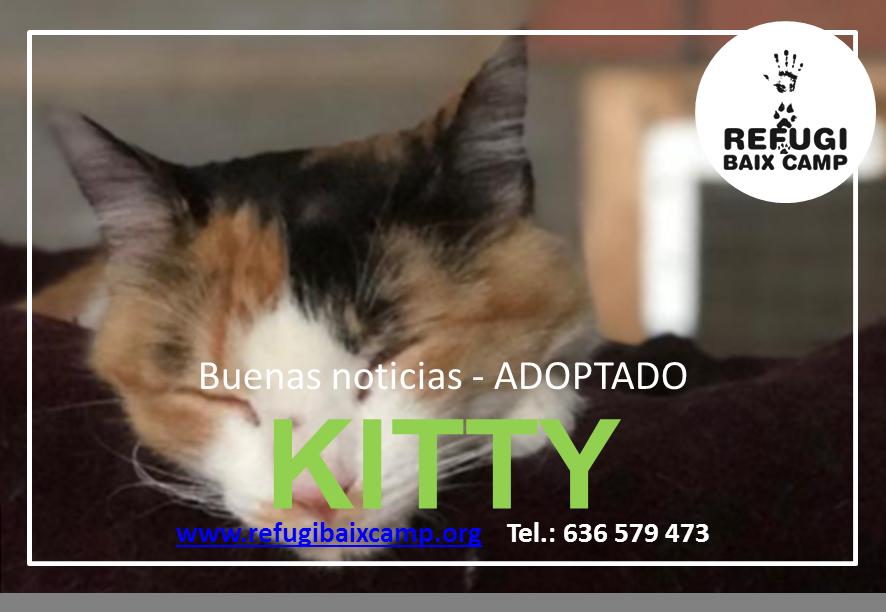 KITTY ADOPTADA