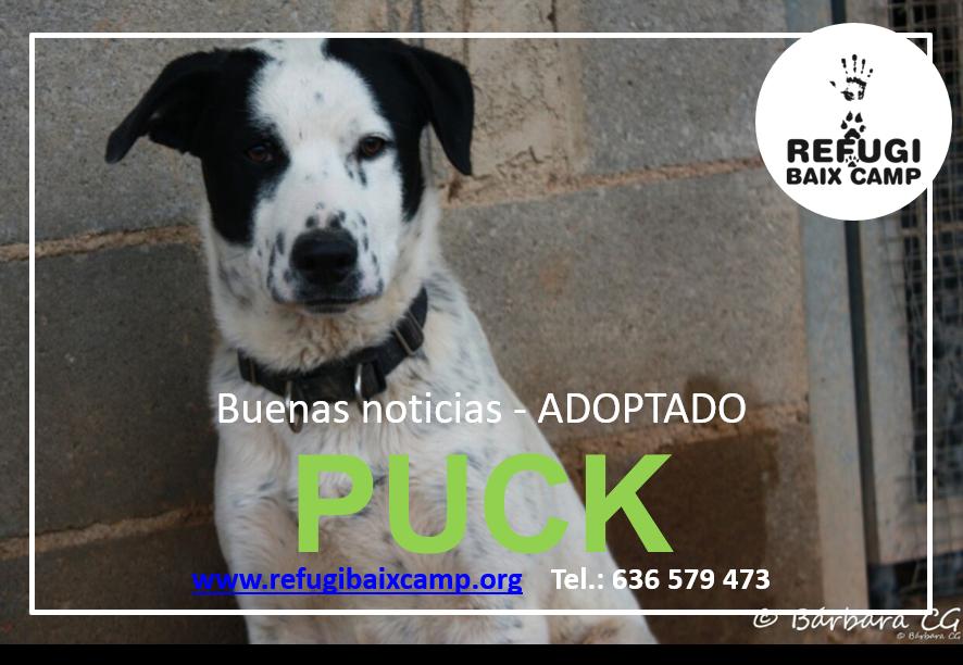 PUCK ADOPTADO